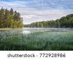 peaceful morning mood with... | Shutterstock . vector #772928986