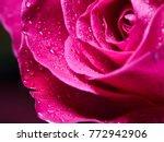 Stock photo dark pink rose 772942906