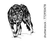 Wolf In Wild Life. Vector ...