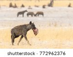 spotted hyena walking close to... | Shutterstock . vector #772962376