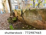 roots of trees on ground... | Shutterstock . vector #772987465