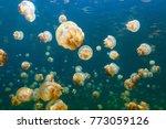 underwater photo of endemic...   Shutterstock . vector #773059126
