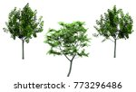 isolated trees on white... | Shutterstock . vector #773296486