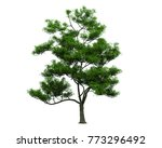isolated trees on white... | Shutterstock . vector #773296492