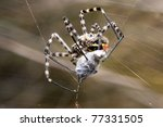 A Spider Is Captive To Its Pre...