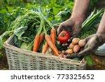 tomato and potato in muddy... | Shutterstock . vector #773325652