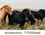 beautiful black and brown... | Shutterstock . vector #773350666