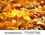 beautiful autumn leaves on... | Shutterstock . vector #773357782
