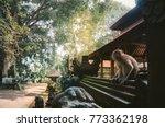 sacred monkey forest sanctuary  ... | Shutterstock . vector #773362198