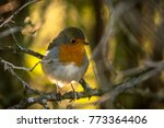 the european robin | Shutterstock . vector #773364406