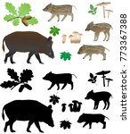 wild pig with cubs in color... | Shutterstock .eps vector #773367388