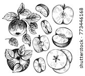 sketches and engravings apples  ... | Shutterstock .eps vector #773446168