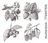 set berries. raspberry ...   Shutterstock .eps vector #773447506