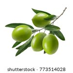 Green Olive Branch Isolated On...