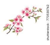 cherry blossoms illustration.   ... | Shutterstock .eps vector #773530762