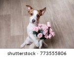 the dog is holding flowers in... | Shutterstock . vector #773555806