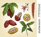 sketch of cocoa elements.... | Shutterstock .eps vector #773725162