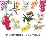 illustration with collection of ... | Shutterstock .eps vector #77374801