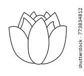 lotus flower wild botanical...   Shutterstock .eps vector #773834812