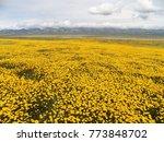 massive wildflower bloom at...   Shutterstock . vector #773848702