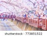 jinhae gunhangje festival... | Shutterstock . vector #773851522