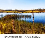 louisiana swamps autumn | Shutterstock . vector #773856022