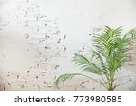 white brick wall with coconut... | Shutterstock . vector #773980585