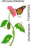 illustration of a monarch... | Shutterstock .eps vector #773997052