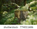 north scandinavian pine forest  ... | Shutterstock . vector #774011686