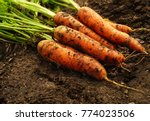 a bunch of fresh carrots with... | Shutterstock . vector #774023506
