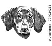 vector illustration of a... | Shutterstock .eps vector #774024286