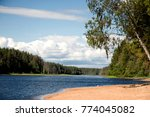 birch on the river bank  sand... | Shutterstock . vector #774045082