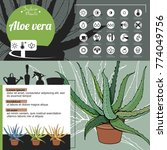 template for indoor plant aloe... | Shutterstock .eps vector #774049756