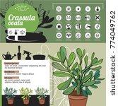 template for indoor plant... | Shutterstock .eps vector #774049762