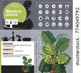 template for indoor plant... | Shutterstock .eps vector #774049792