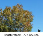 the colorful yellow leaves in... | Shutterstock . vector #774122626