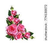 pink rose flowers corner... | Shutterstock . vector #774130072