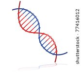 Glossy vector illustration showing a DNA strand reflected on a white background - stock vector