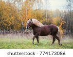 brown draft horse is in the... | Shutterstock . vector #774173086