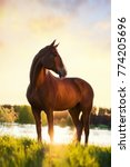 Stock photo portrait of a horse standing with his back to the sun at sunset on the water 774205696