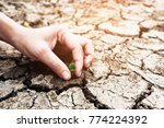 hands holding a tree growing on ... | Shutterstock . vector #774224392