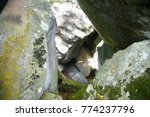 Rocks Inside A Cave With Green...