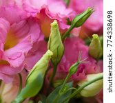 pink beautiful eustoma flowers  ... | Shutterstock . vector #774338698