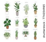 set of house indoor plant... | Shutterstock .eps vector #774354985