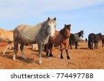 white  black and red horses in... | Shutterstock . vector #774497788