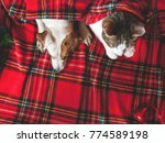 cat and dog under red plaid.... | Shutterstock . vector #774589198