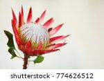 Unusual Flower On Light...