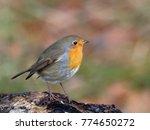 robin   erithacus rubecula  | Shutterstock . vector #774650272