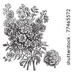 double wallflower  vintage... | Shutterstock .eps vector #77465572