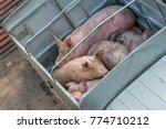 pig on truck transport to...   Shutterstock . vector #774710212